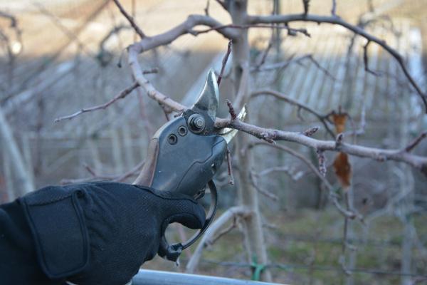 Eine einfacher Akku Gartenschere - Eine Alternative zur teureren Akku Rebschere?